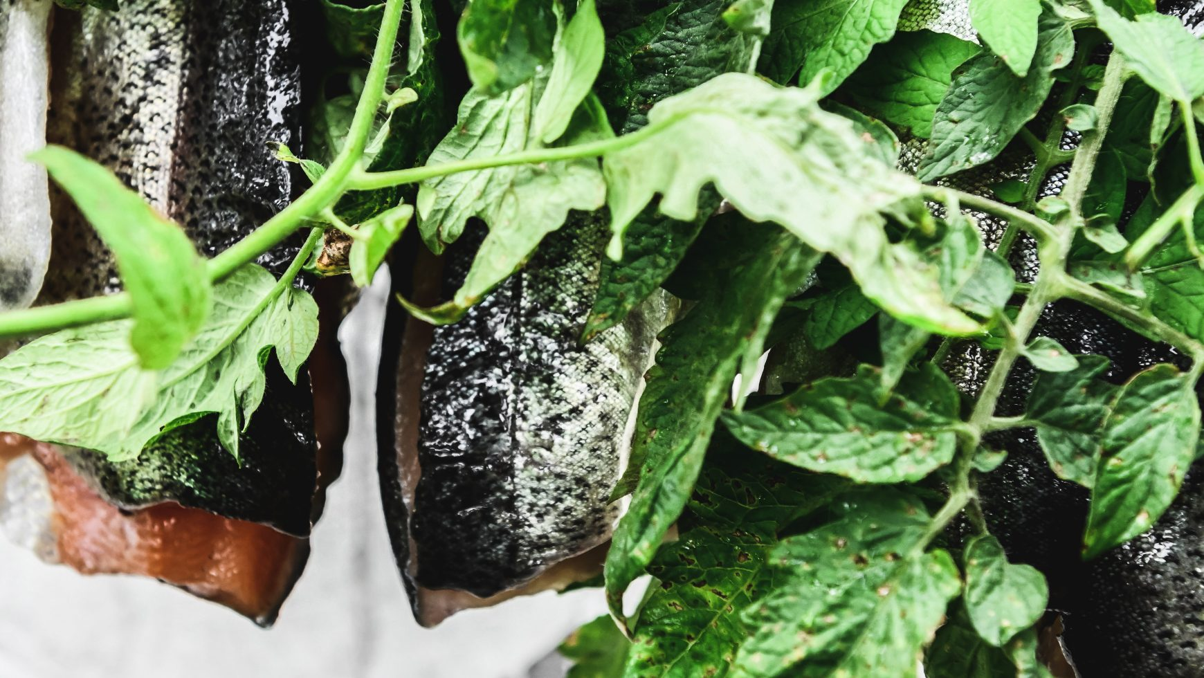 Summer Trout Recipes: Sous Vide, Confit, Sautéed, and Grilled